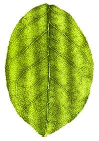 Biosolar-leaf